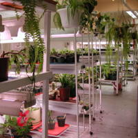 Gardening in Vocational Services area